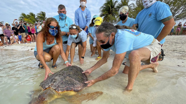 Earth Day Turtle Release